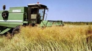 Bursa de cereale la Corabia